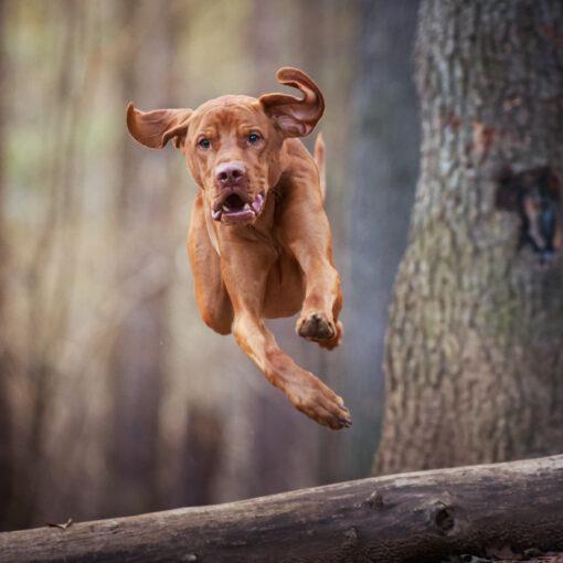 foto cane in movimento
